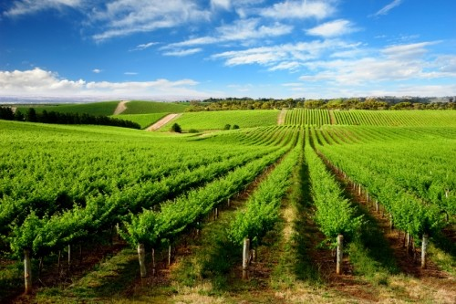 Barossa Wine Tours