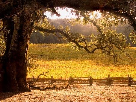 Jack London State Historic Park