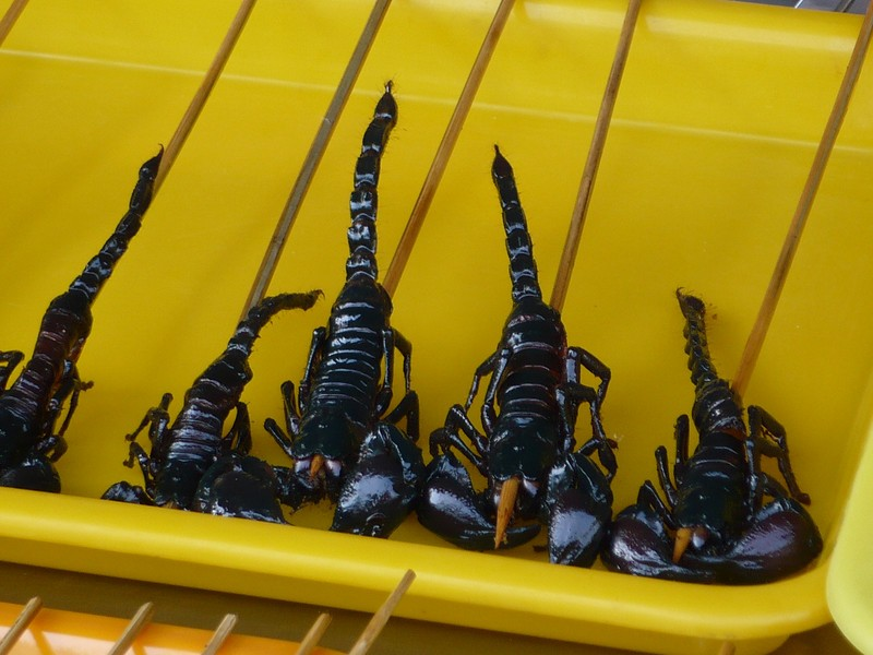 Scorpion on a Stick
