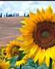 Private tour in Florence