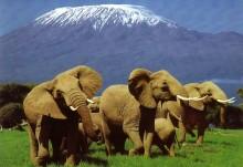 Climbing Mount Kilimanjaro Tours. Moshi. Tanzania